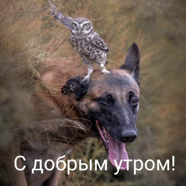 Забавные животные, которые подарят вам улыбку (30 фото)