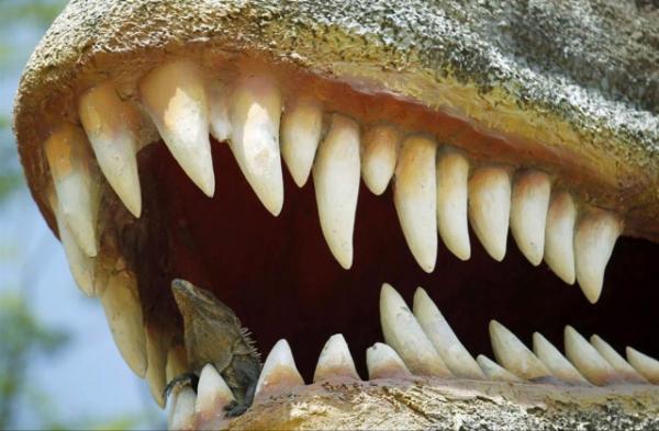 10 животных с самыми мощными укусами