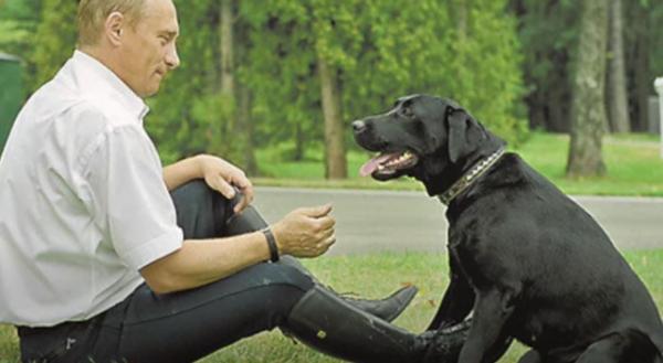 Куда исчезли собаки Владимира Путина? (4 фото)