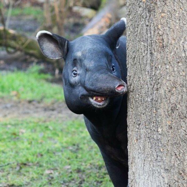 Забавные животные для заряда позитивом (25 фото)