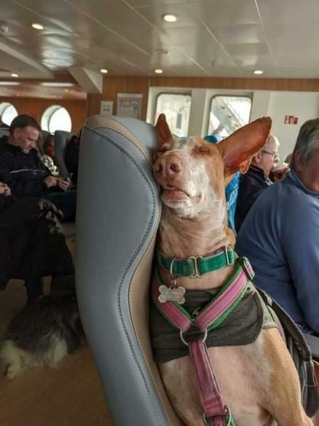 Очаровательные пассажиры (23 фото)