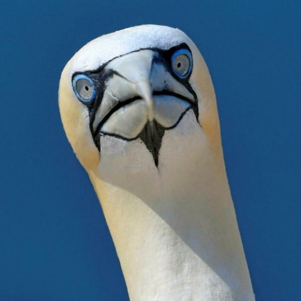 И у птиц тоже бывают свои понедельники (25 фото)