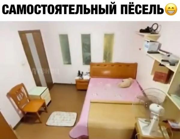 Юмор: Тайная жизнь домашнего питомца