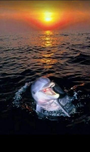Очаровательные дельфинчики (35 фото)