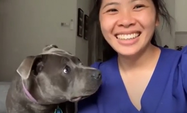 Юмор: Пёс в недоумении - хозяйка заговорила по-собачьи