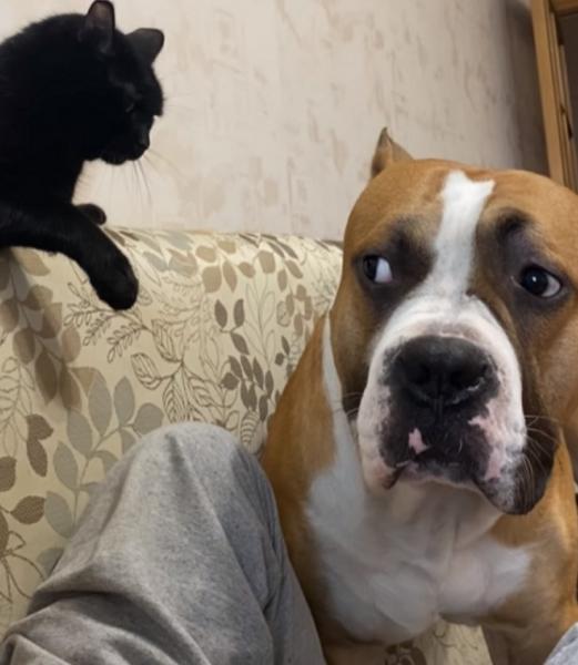 Юмор: Пёс обиделся на кота и высказал ему всё, что о нём думает