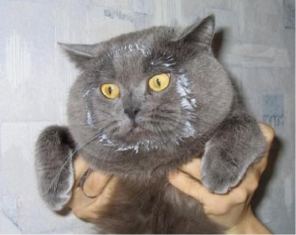 Юмор:  10 доказательств того, что коты — многогранные личности
