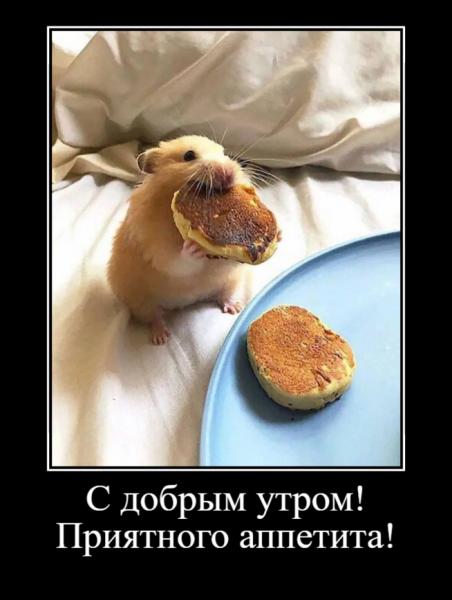 Забавные животные,которые вызовут улыбку и поднимут настроение (30 фото)