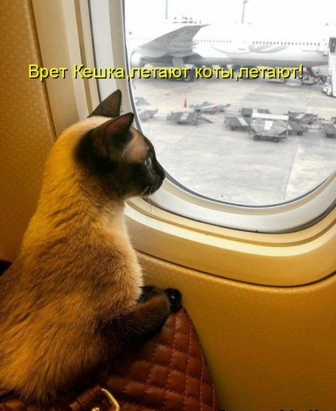Подборка смешных и прикольных котоматриц  (30 фото)