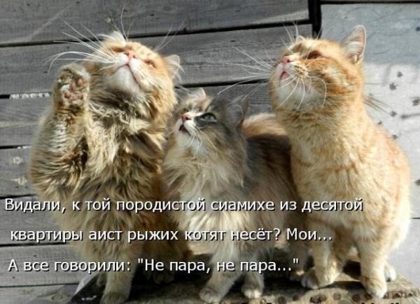 Для Вашего хорошего настроения! (30 фото)