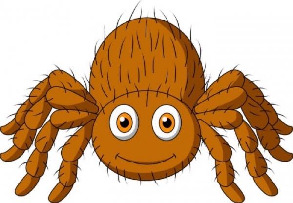 Это надо знать: Узнайте, почему нельзя убивать пауков