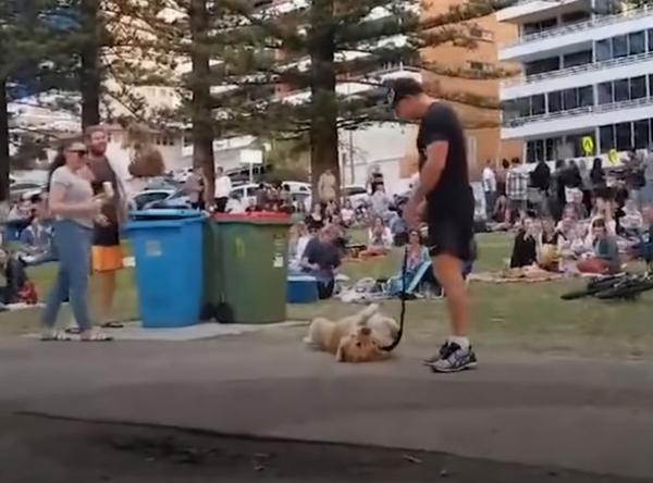 Юмор: Не желая уходить с прогулки, пёс устроил целое шоу
