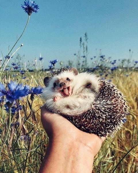 Позитивные животные, которые сделают Ваш день! (30 фото)