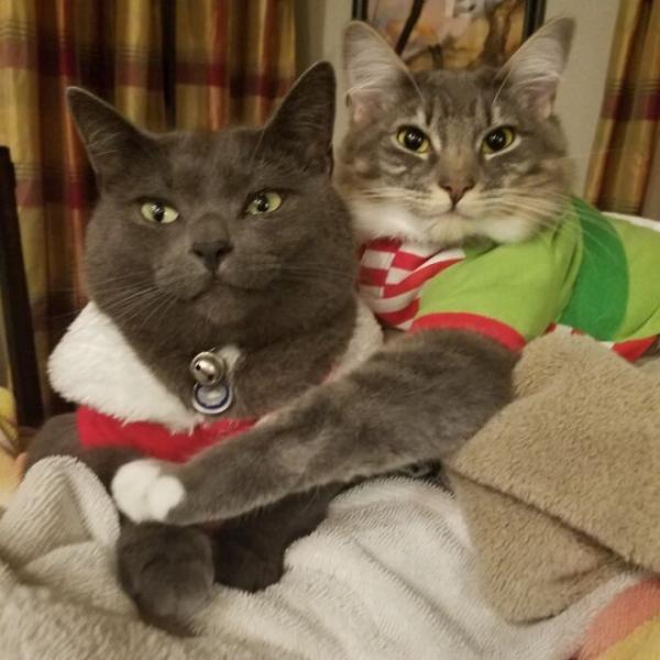 Две кошки лучше, чем одна! (30 фото)
