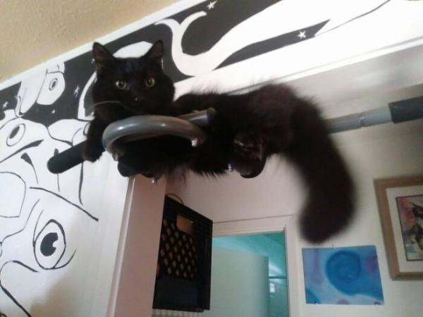 """Приложение """"Кошка"""" перестало работать (24 фото)"""