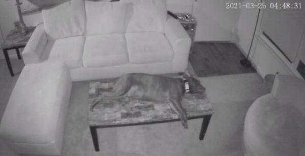 """Собаки тоже иногда """"ломаются"""" и требуют """"перезагрузки"""" (13 фото)"""