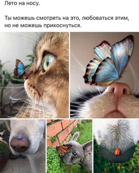 Наши забавные животные (30 фото)