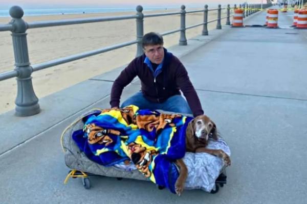 Это любовь: хозяева выгуливают пожилого пса в передвижной кроватке (3 фото)