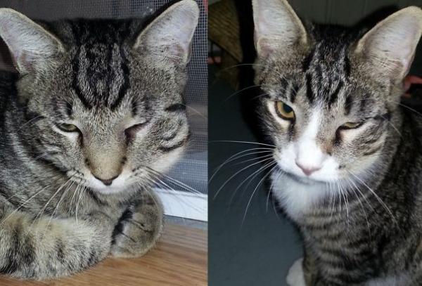 Коты,пожалевшие о своём решении поиграть с пчелой (20 фото)