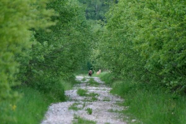 Редкий кадр в Эстонии.В Харьюмаа засняли гуляющих вместе медведя и волка