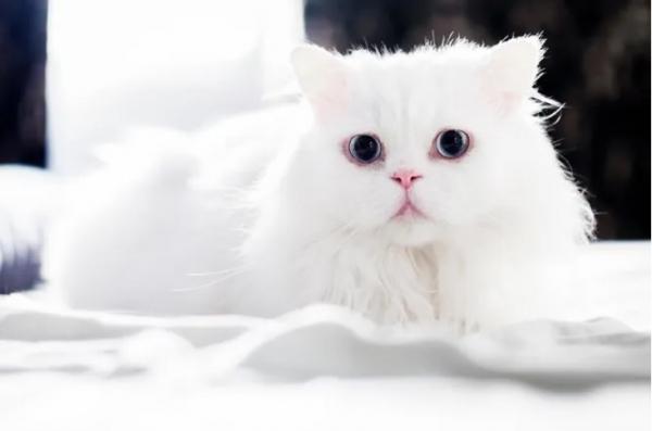 Китайская кошка просто лежит в машине. И зарабатывает больше хозяев (3 фото)