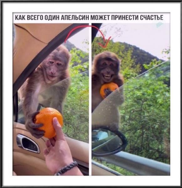 Животные,которые подарят улыбку и поднимут настроение (30 фото)