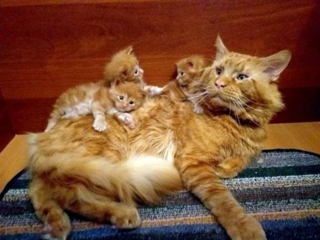 """Животные тоже """"наслаждаются"""" всеми радостями материнства  Всякая всячина"""