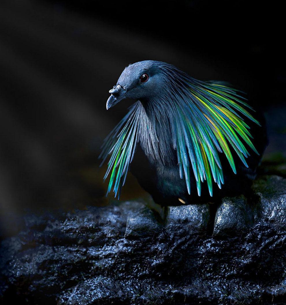 Потрясающие фотографии птиц  (30 фото)