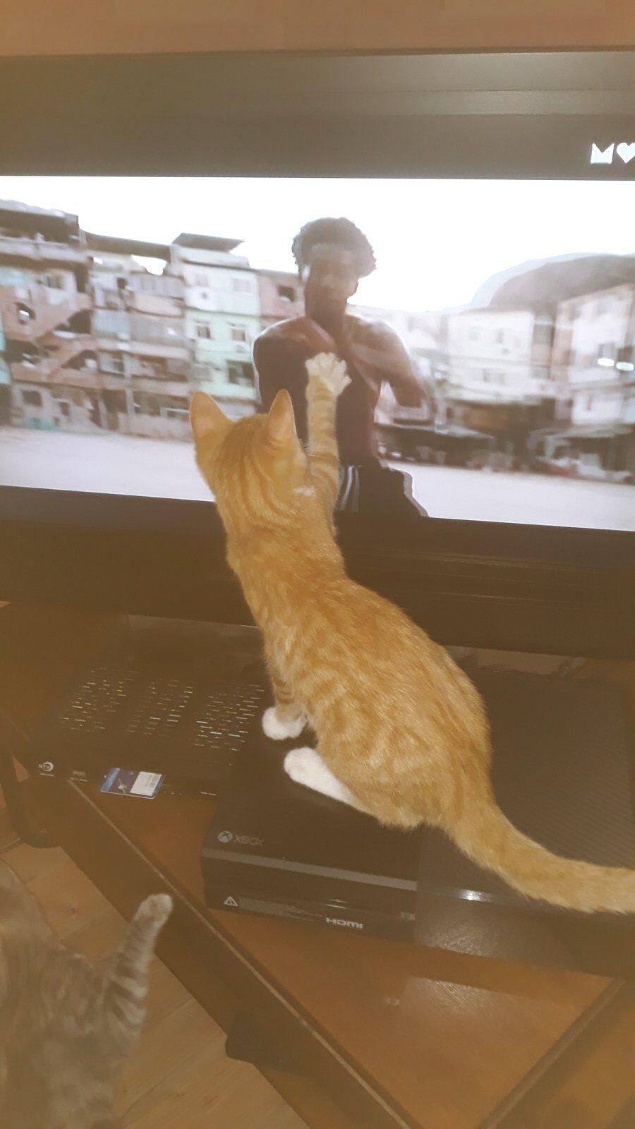 Забавные кошки, которые поднимут вам настроение