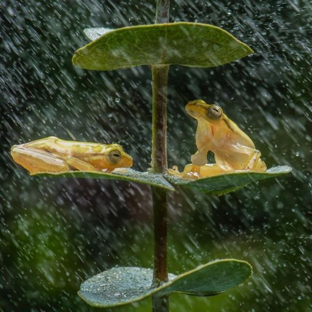 Красочные и забавные фотографии лягушек индонезийского фотографа  Всякая всячина