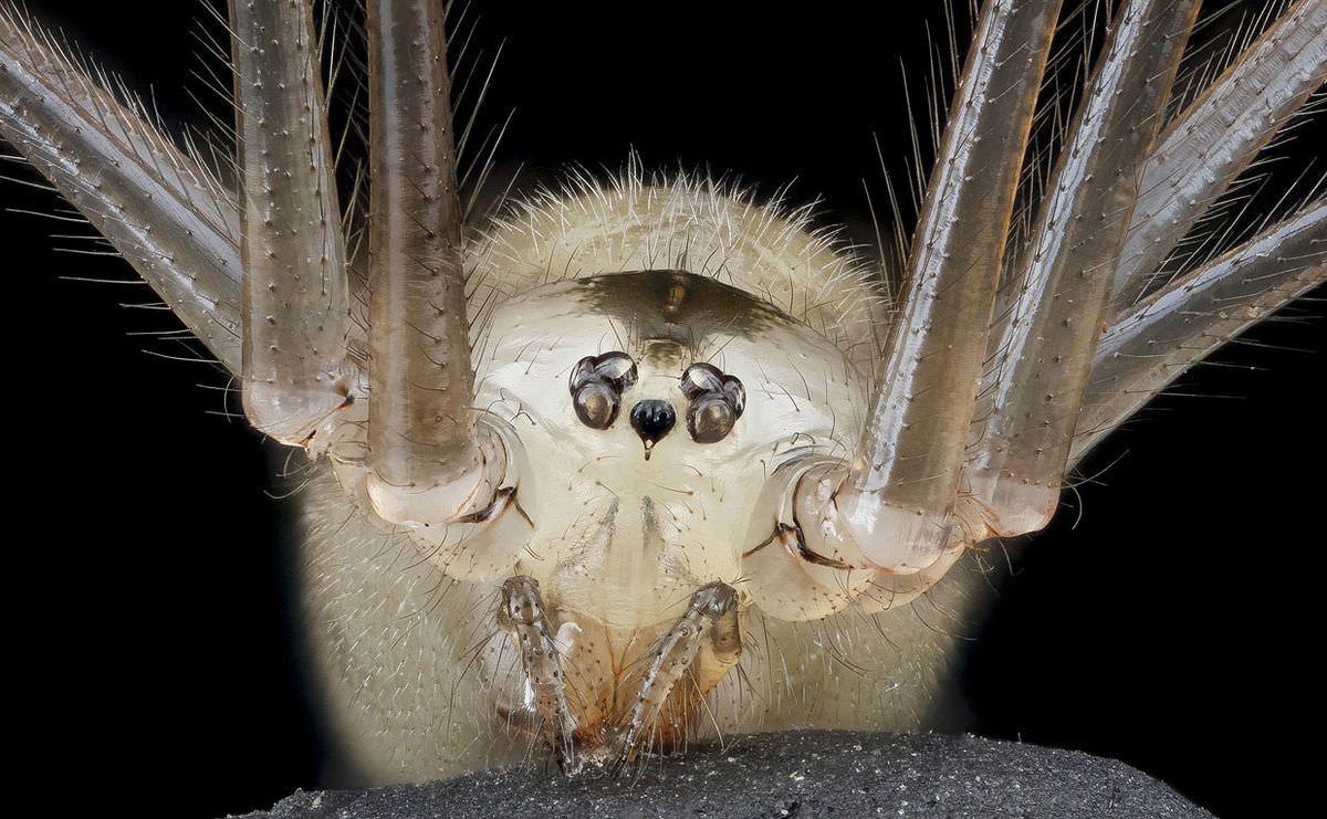 Красивая коллекция насекомых от фотографа Sam Droege (19 фото) Насекомые, существ, других, «пришельцев», макромир, захватывающий, Посмотрите, экологические, всевозможные, занимающий, живых, обладают, класс, многочисленный, самый, Земле, животных, остальных, среди, разнообразием