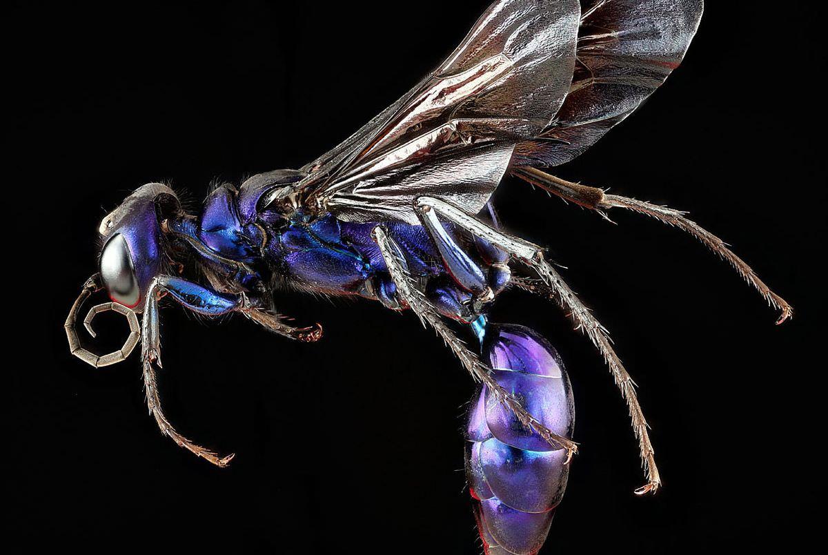 Красивая коллекция насекомых от фотографа Sam Droege