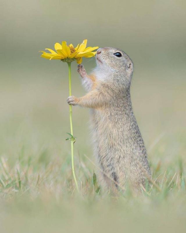 Позитив в фотографиях с животными  Всякая всячина