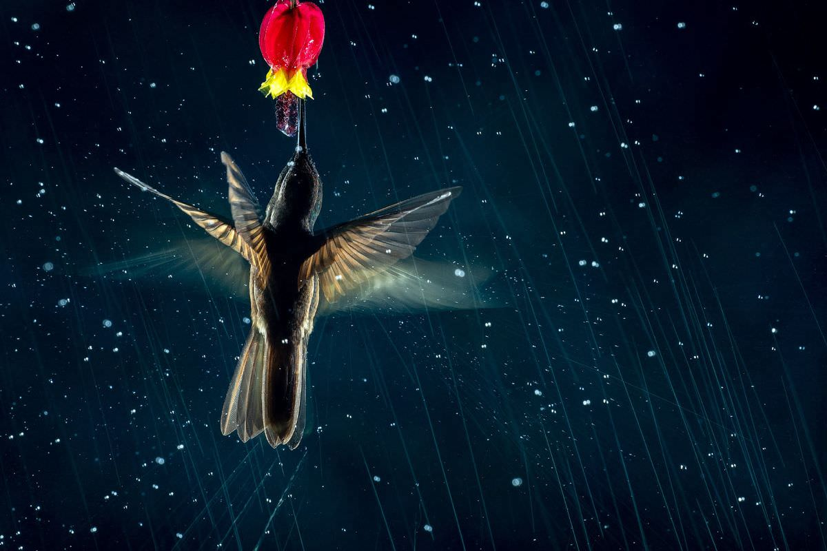 Победители конкурса на лучшие фотографии птиц Bird Photographer of the Year 2021 (18 фото) birds, Photographer, птица, высоте, Carla, семейства, метра, Kevin, Rhodes2021, лучшие, конкурс, заборе, Rogerson2021, James, планете, аистов, исчезающий, самый, крыльев, размахом